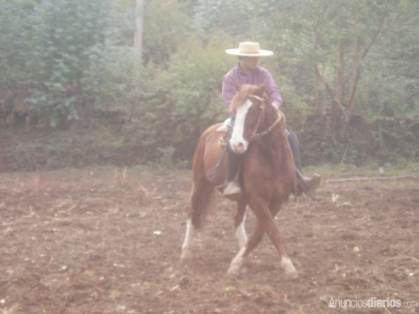 venta de caballos inscritos - Animales en General - Todo Chile