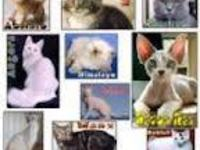 VENTA DE GATOS CFT - Animales en General - Cali