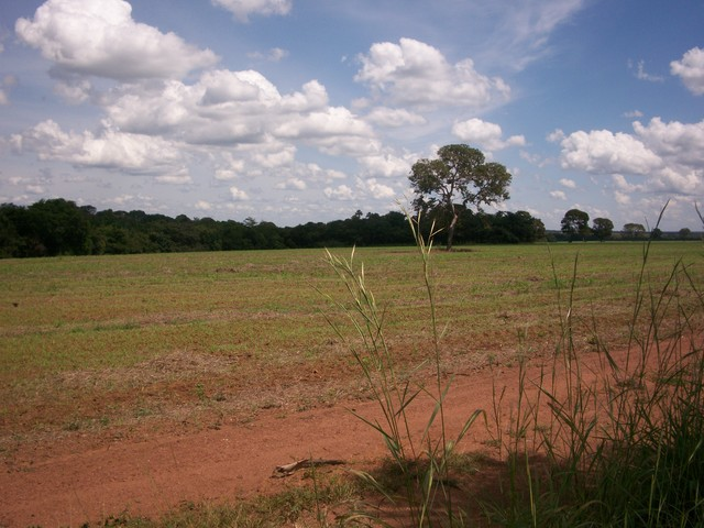 one farme  30.000 hecatares  in Tocantins,Brasil. - Terrenos / Lotes - Albany